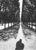 Stanko Abadžic - Trees and Shadows Click for more Images